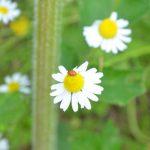 fleur-plante-jardin